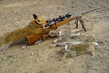 ban_fox_hunting