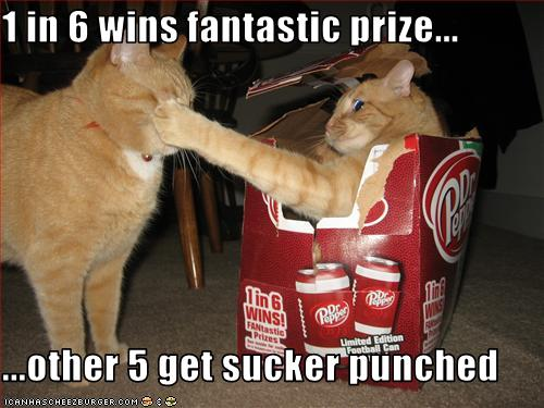funny-pictures-one-cat-gets-punched[1]