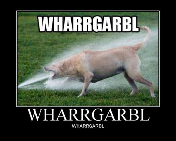 lol-dog